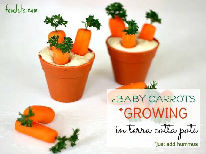baby carrots growing in terra cotta pots