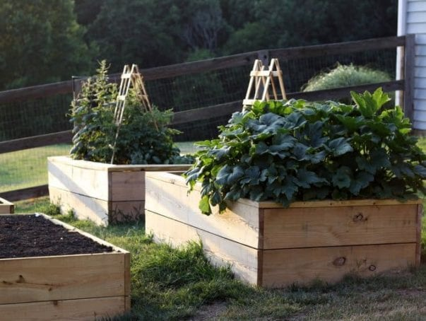 raised beds, hillsborough